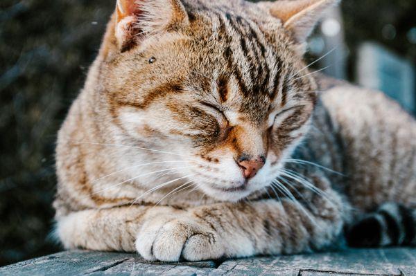 猫咪的这根东西很神奇任务才?